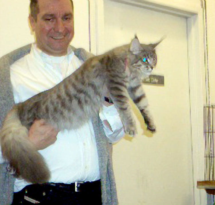 Eric Reijers helping out as a steward/handler in Allan Raymond's ring with a winning Maine Coon.