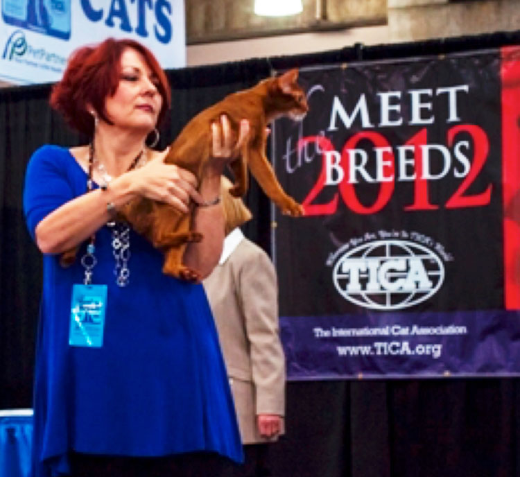 Meet the Breeds, co-hosted by the American Kennel Club in New York City