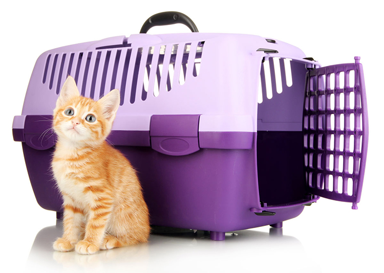 Kittens & Transport: What You Must Tell Their Owners